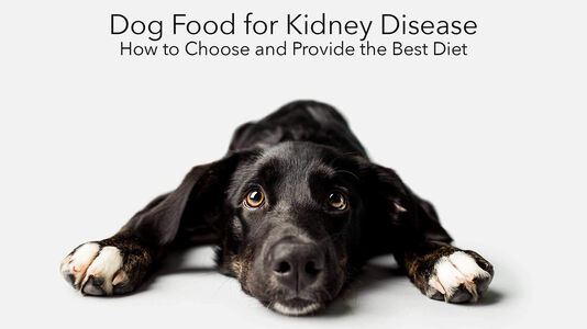 Dog Food for Kidney Disease: How to Choose and Provide the Best Diet