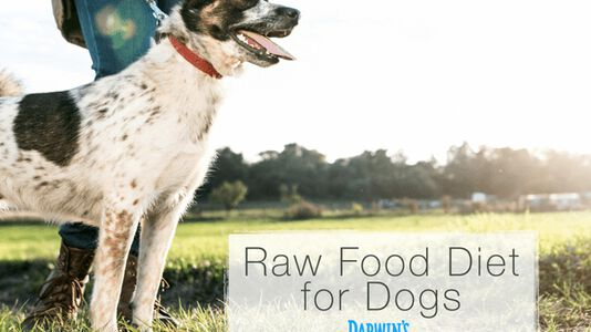 Why A Raw Food Diet for Dogs