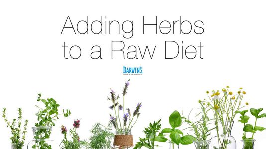 Herbs and Raw Fed Dogs