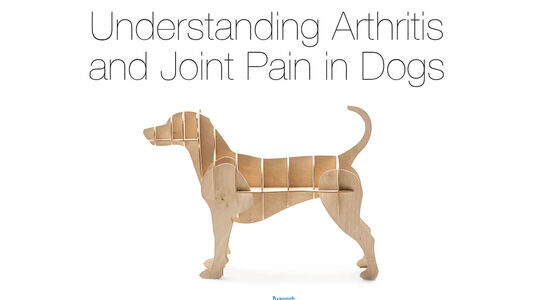 Your Dog's Arthritis and Joint Health