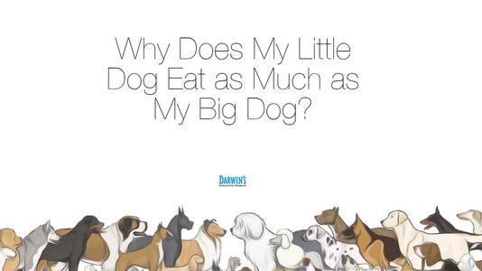 How Much Should My Dog's Eat?