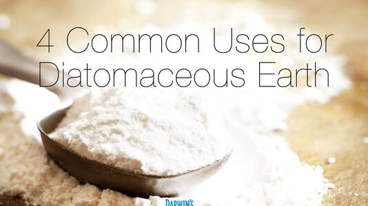 Fighting Fleas with Diatomaceous Earth