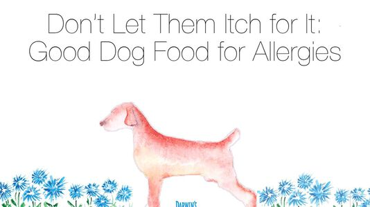 How to Choose the Best Hypoallergenic Dog Food for Allergies