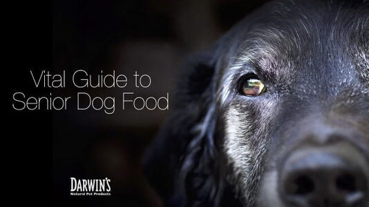 What Should You Feed Your Senior Dog?