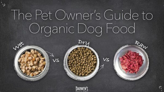 The Pet Owner's Guide to Organic Dog Food