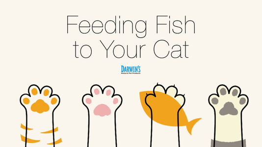 Cats & Fish: To Feed or Not To Feed