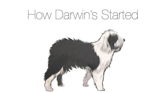 How Darwin's Started
