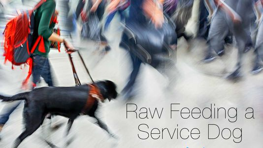 Raw Feeding a Service Dog