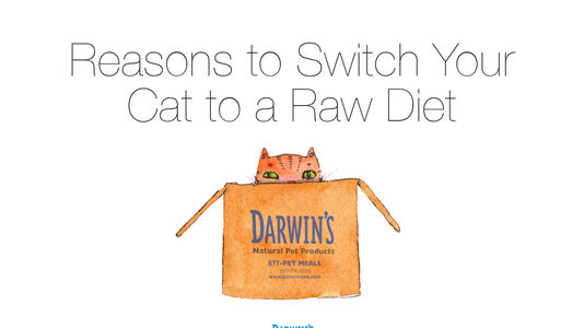 Why Switch To A Raw Diet For Your Cat
