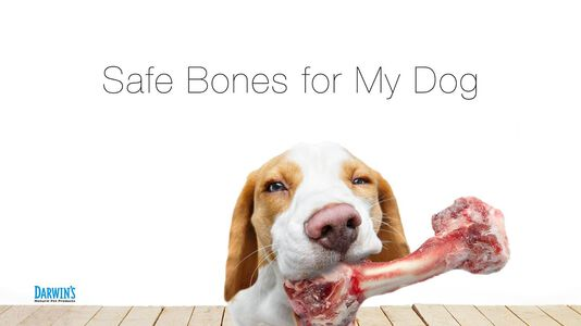 Safe Bones for Dogs