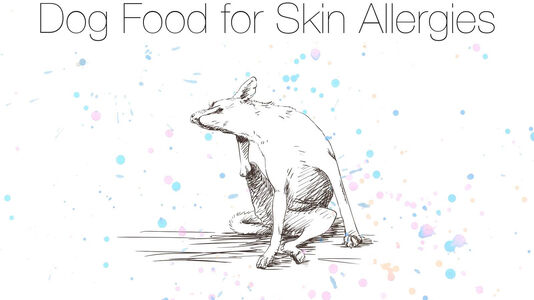 Dog Food for Skin Allergies?