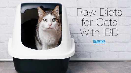 Raw Diets for Cats With IBD