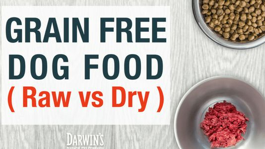 Grain-Free Dog Food (Raw vs Dry)