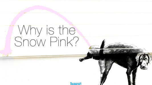 Why Is My Dog Peeing Pink? – Ask Darwin's