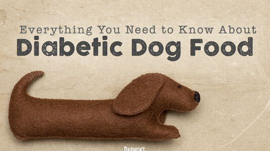 A Diabetic Dog Food Guide
