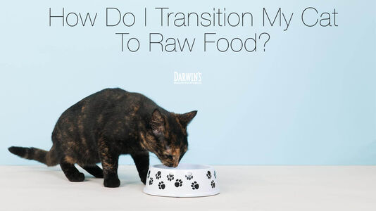 How Do I Transition My Cat to Raw Food?