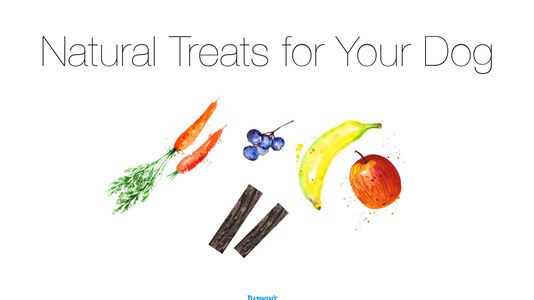 Natural Treats for your Dog