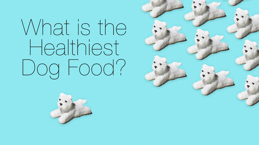 Choosing the Healthiest Dog Food for Your Dog