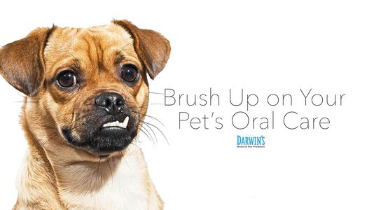 It's Time To Brush Up On Your Pet's Oral Care
