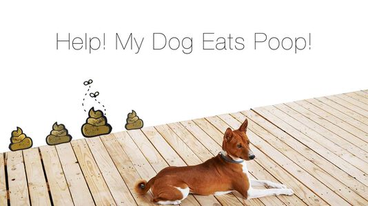 Coprophagia: Will A Raw Diet Cure My Dog's Poop Eating Habit?