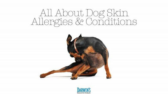 Dog Skin Allergies and Conditions