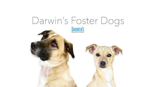 Darwin's Foster Dogs