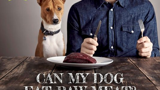 Can My Dog Eat Raw Meat?(part 1)