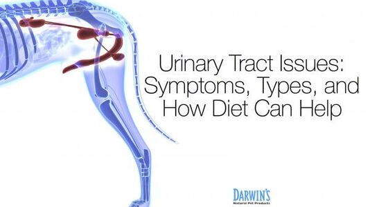 How Dog Food for Urinary Issues Can Help