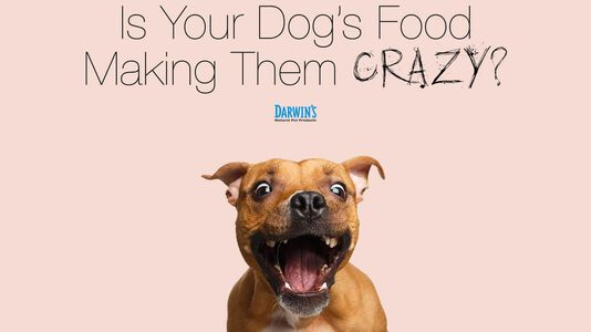 Is Your Dog's Diet Making Them Crazy?