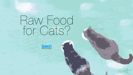 Raw Food for Cats?