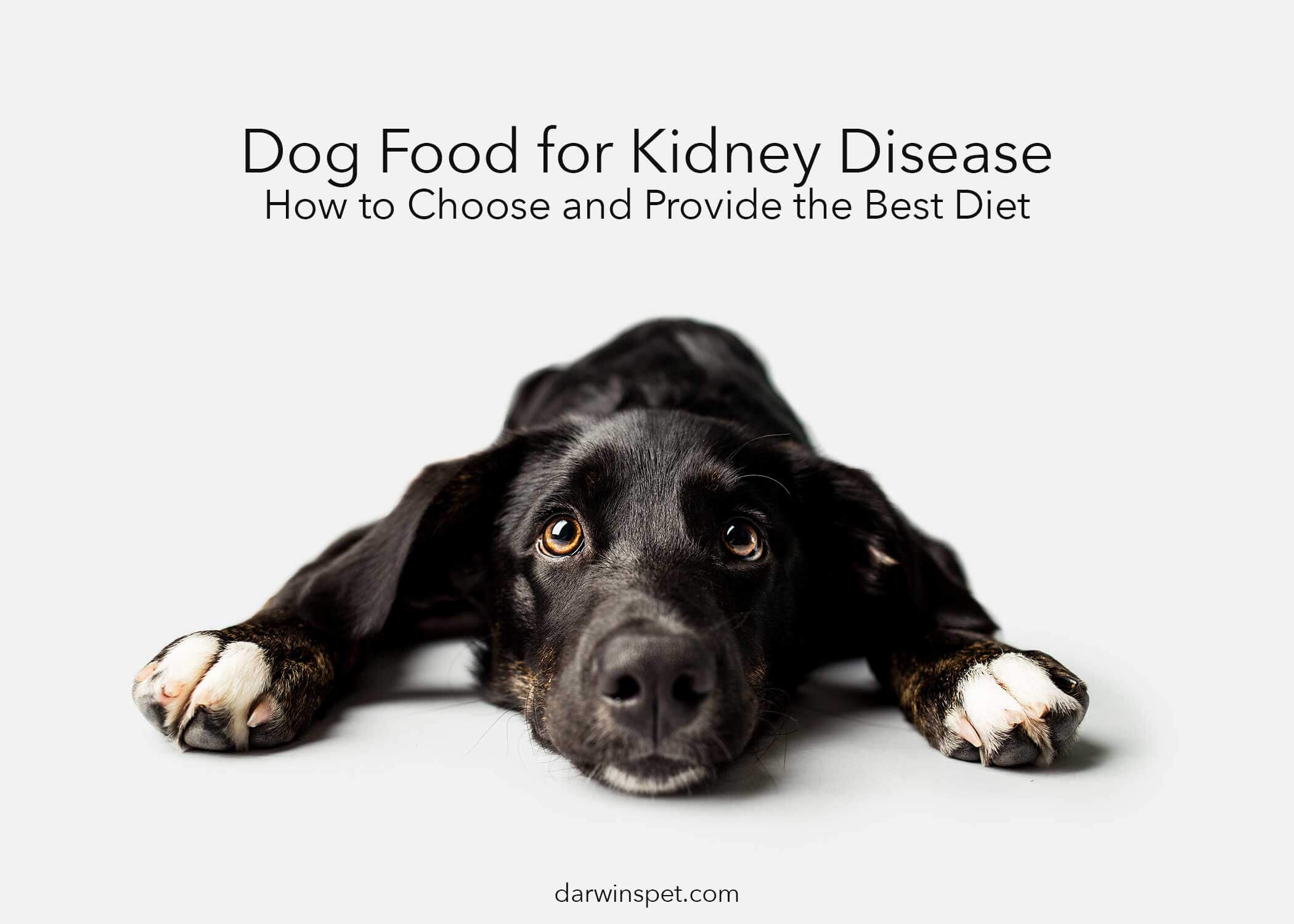 Dog Food For Kidney Disease How To Choose And Provide The Best Diet Darwin S Natural Pet Products Darwin S Pet Food