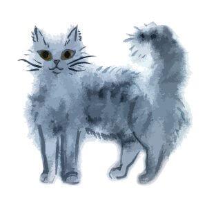 Feline UTM IBD