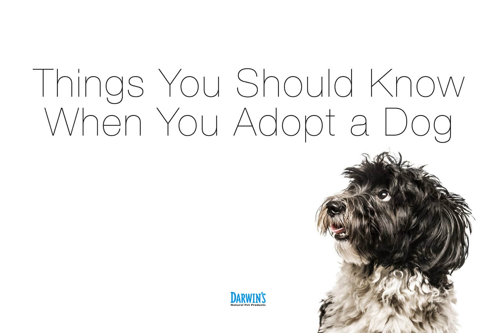 Tips On Adopted Dogs