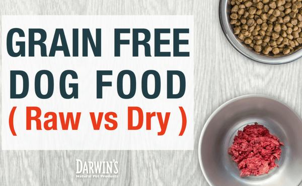 Grain-Free Dog Food (Raw vs Dry)