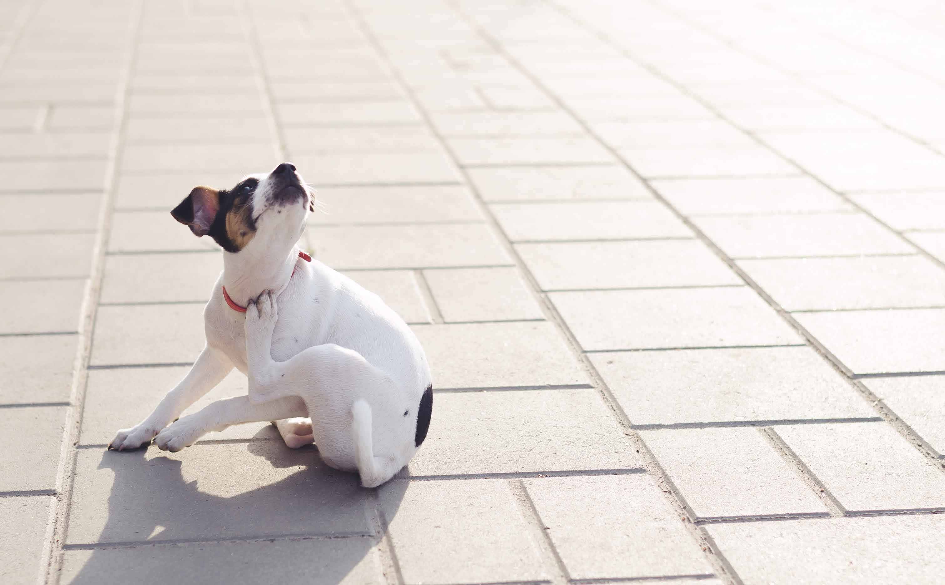 The Power of Limited Ingredient Dog Food for Allergies, Itchy Skin, and Sensitive Stomachs