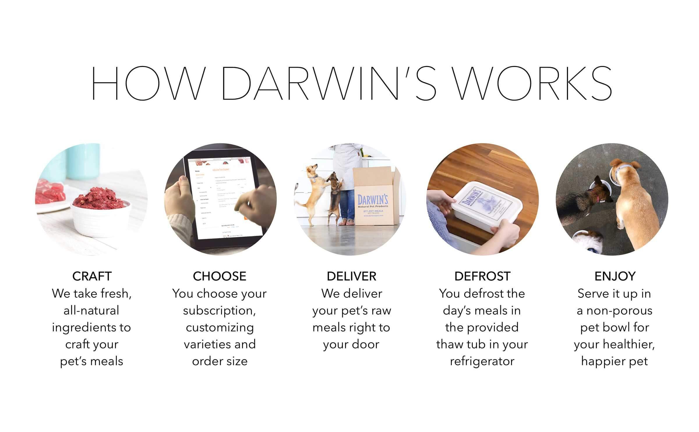 darwins-services