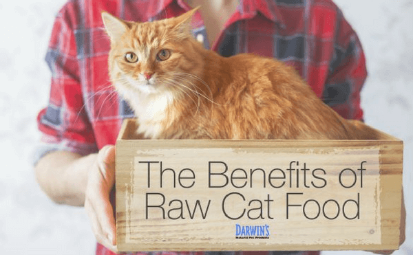 Why Raw Cat Food