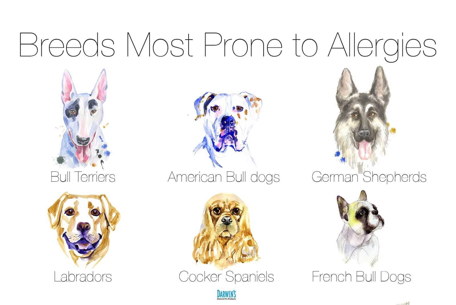 Dogs prone to Allergies