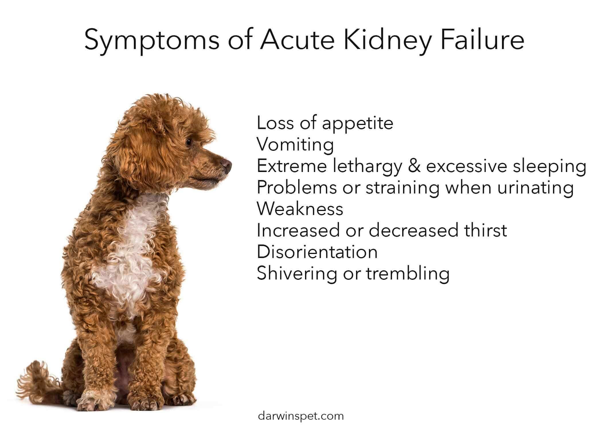 acute-kidney-disease-in-dogs