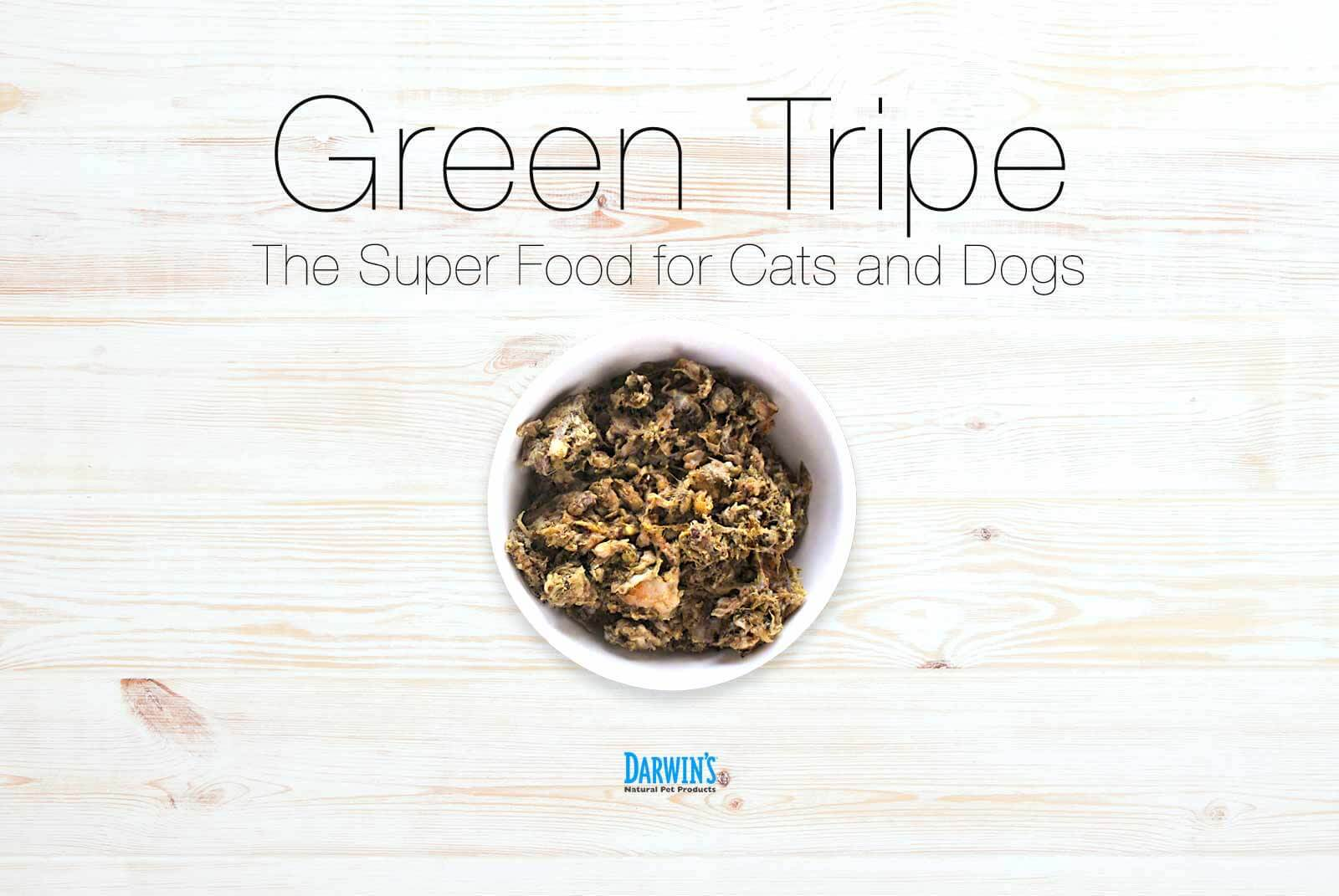 Green Tripe: The Superfood for Pets