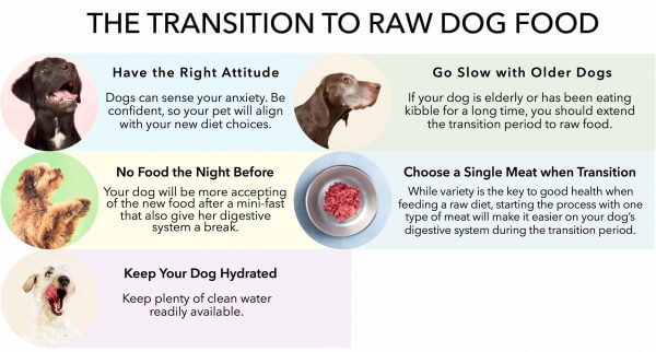 how to transition your dog to raw checklist