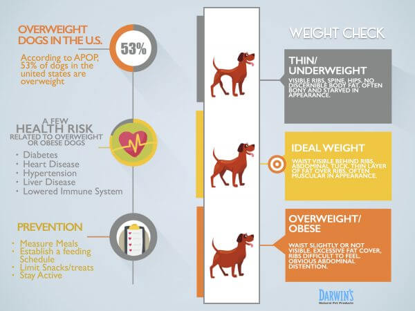 weight-info-card