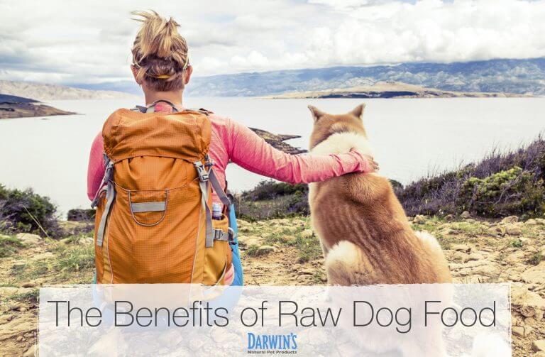 Raw Dog Food: Benefits & Options