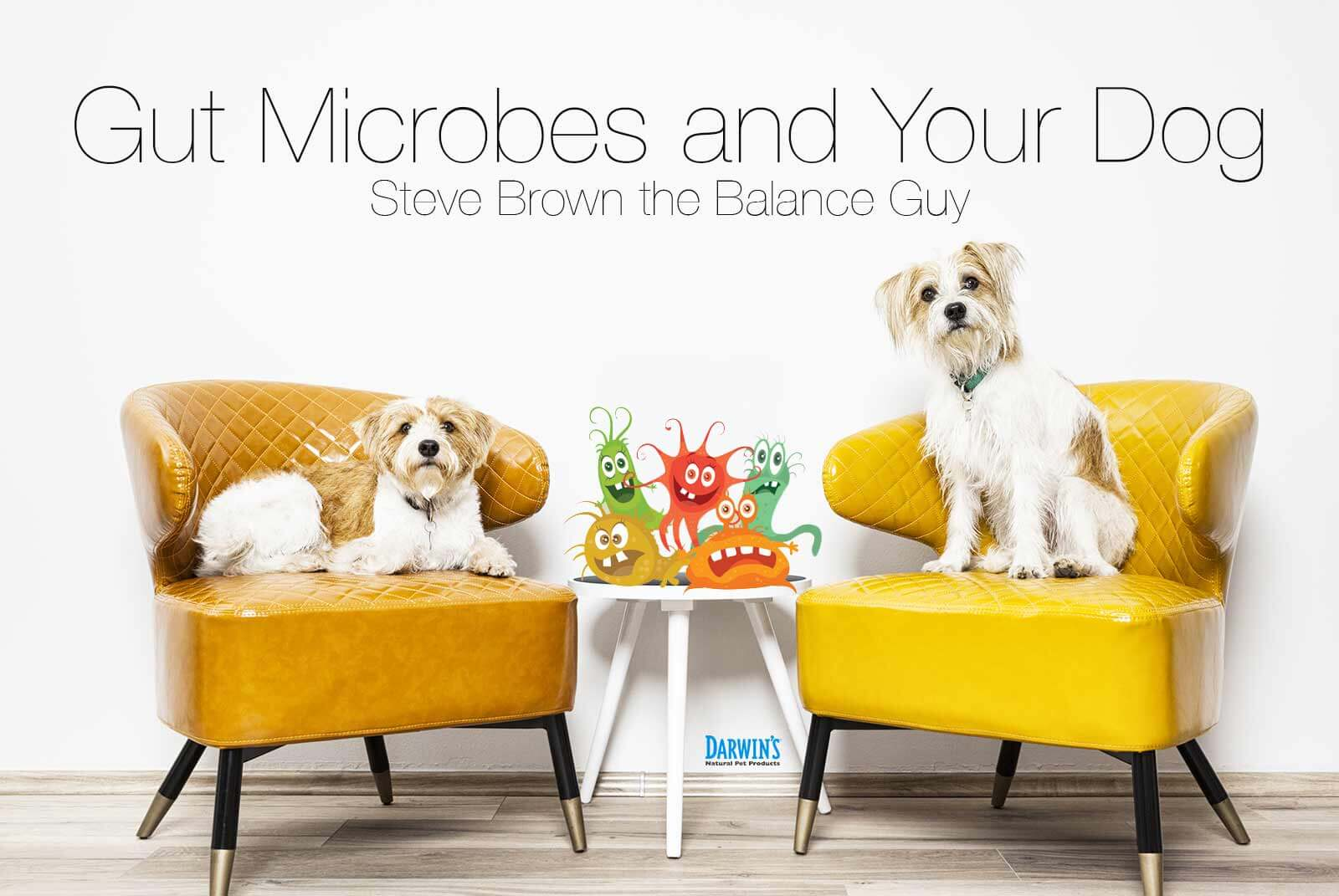 Gut Microbes and Your Dog
