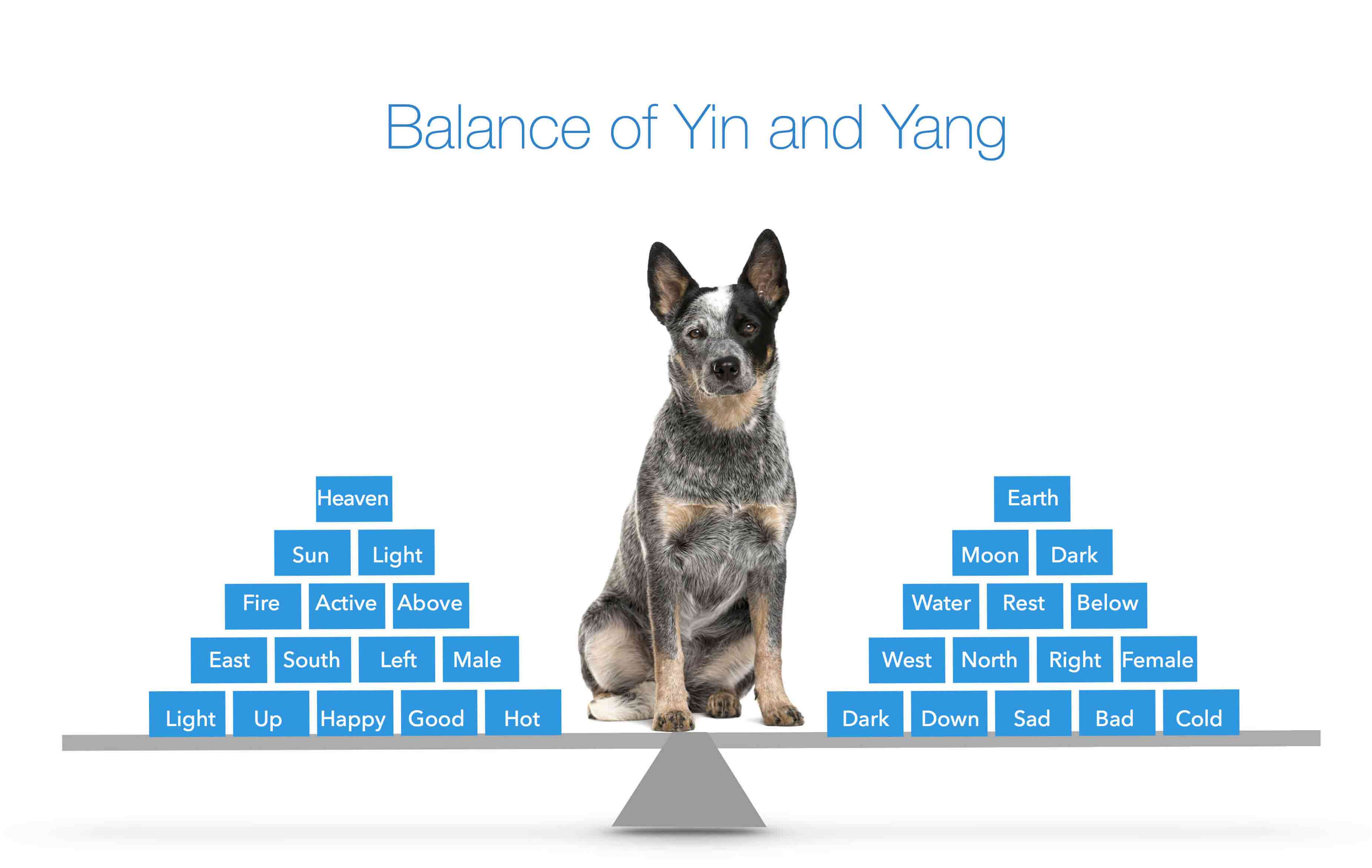 Yin and Yang Theory for Dogs