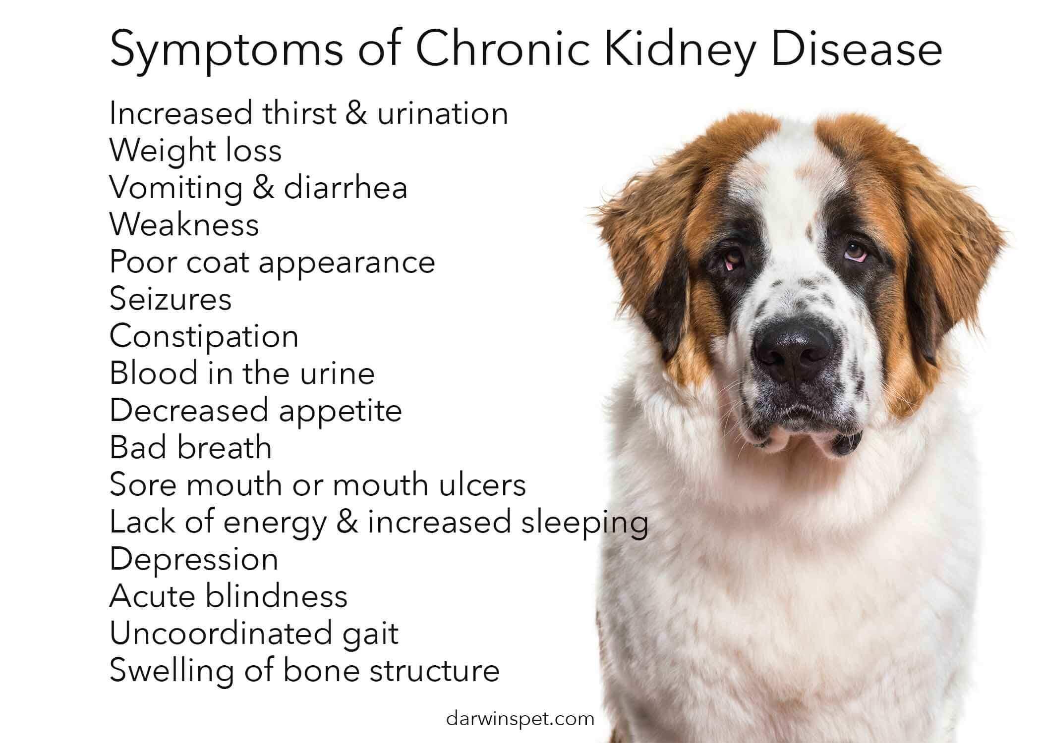 kidney-disease-in-dogs
