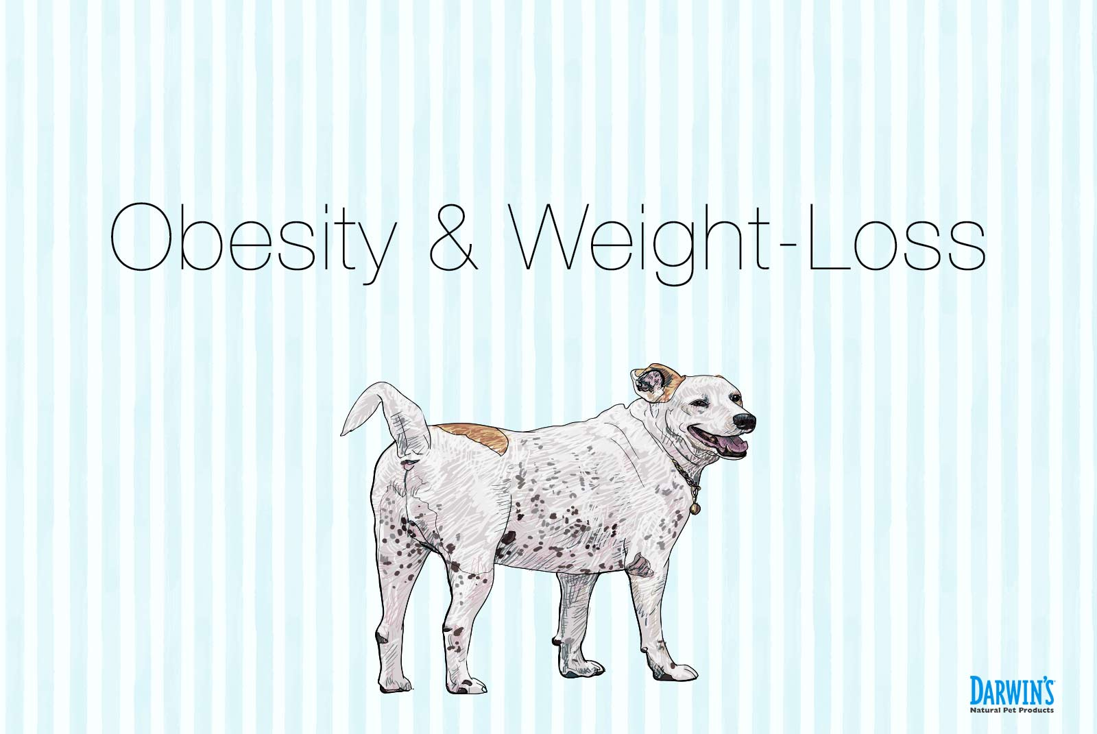 Dog Obesity & One Dog's Weight Loss