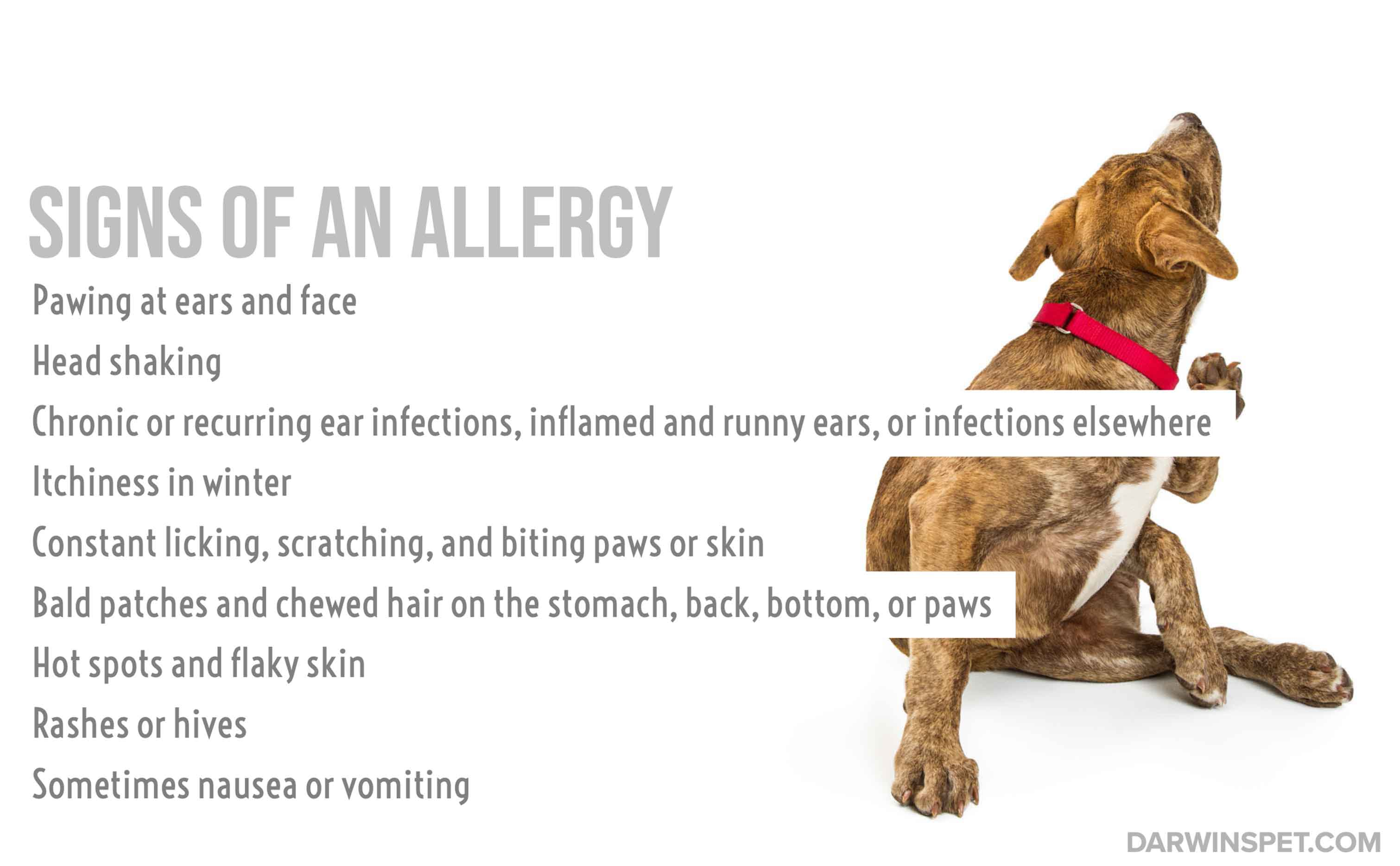signs-of-allergies