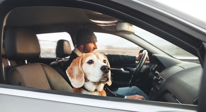 Man enjoying the modern car driving with his beagle dog sitting on the co-driver passenger seat.