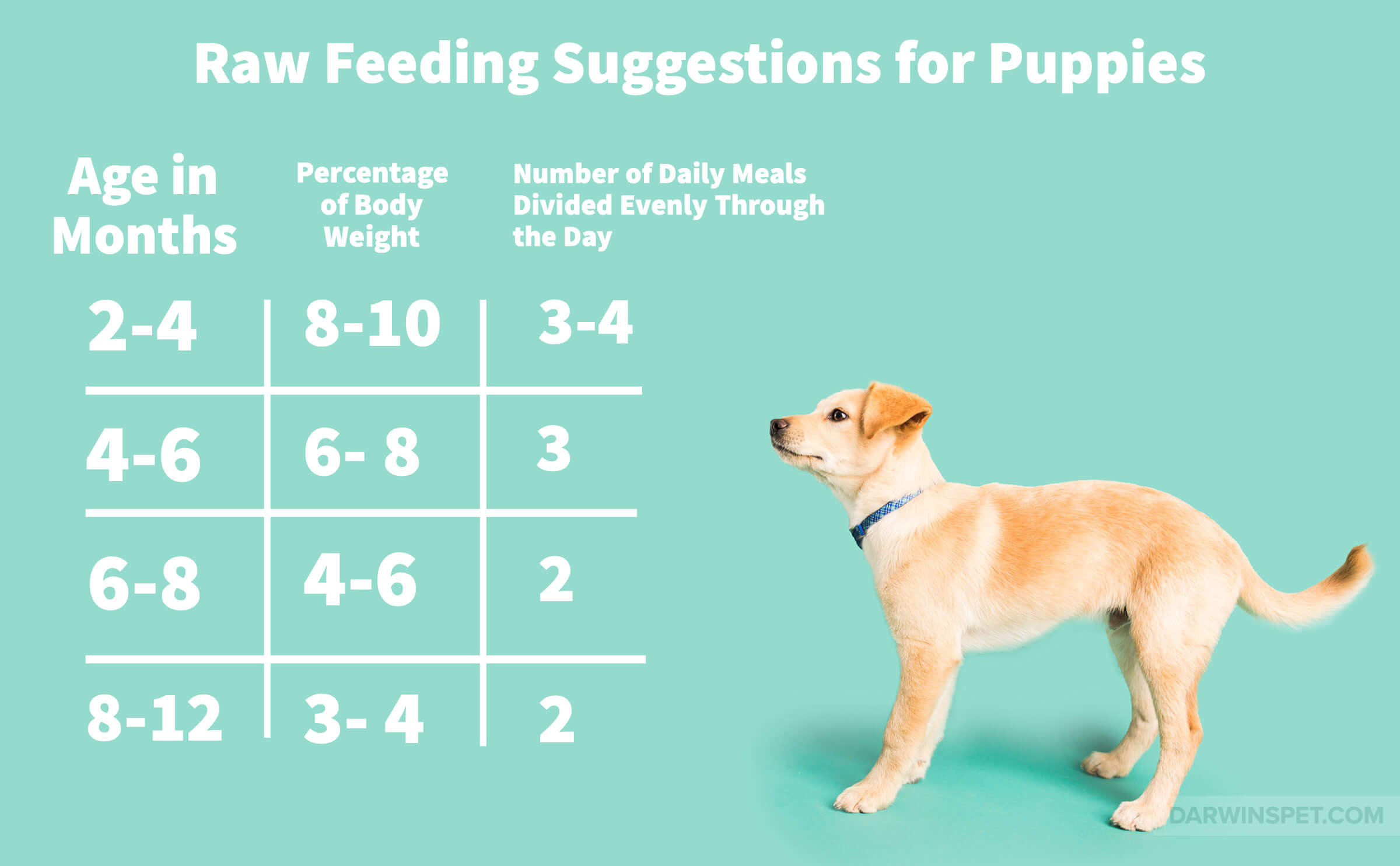 Is a Raw Puppy Food Diet Right for Your Pet? | Darwin's ...